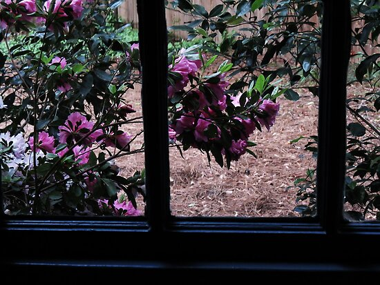Through my Window© by walela