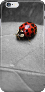 Ladybird by LeJour