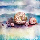 sea shells by Karin  Taylor