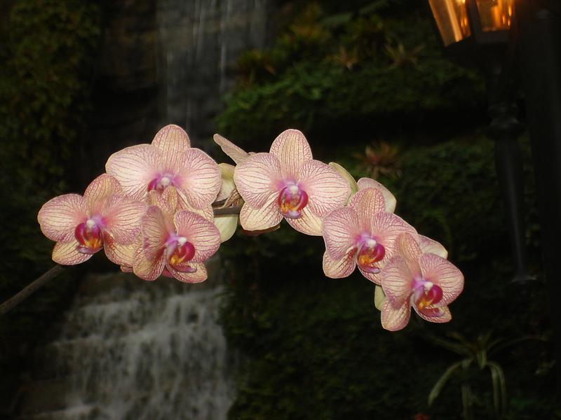 Fabulous Orchids by GraNadur
