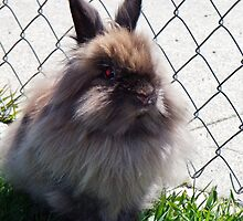 My lionhead rabbit, Easter fun for kids cute by linwatchorn