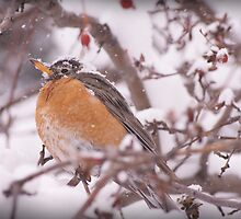 Robin in Snow 2 by Jeri Stunkard