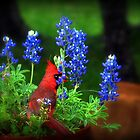 Cardinal In The Bluebonnets by Penny Odom