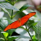 Orange Butterfly by Meghan1980