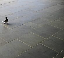 Trained Pigeon at Station  by AntoneOz