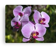 Sparkling Blooms   Canvas Print