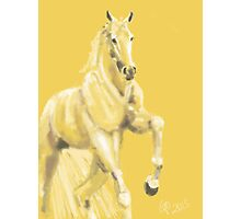 Horse - Andalusian Photographic Print