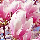 Pink Magnolia Tree by afeimages