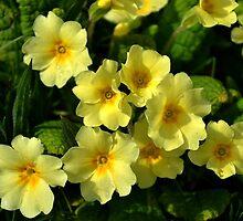 Spring Flowers by lynn carter