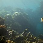 Underwater View by SHappe