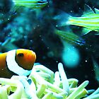 Clownfish by SHappe