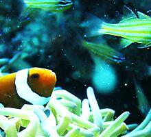 Clownfish by SHappe