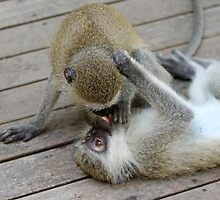 The kiss of a monkey by jozi1