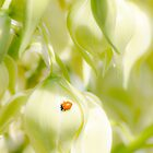 Lady Bug & Yucca Blooms by Darcy Grizzle