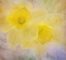 daffodil duo by Teresa Pople