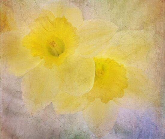 daffodil duo by Teresa Pople