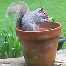 Breakfast in a Flower Pot by Pat Yager