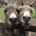 2 DONKEYS DOUBLE THE WISH GREETING CARD by dagokid