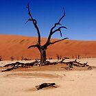 """Dead Vlei Tree""  Sossusvle Namibia by aidan  moran"