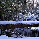 Winter Stream Crossing by Joshua Bales