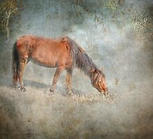 Morning Sun by Susan Werby