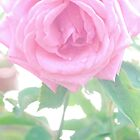 Softest Pink by HeavenOnEarth