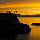 Bonsai Rock by Dianne Phelps