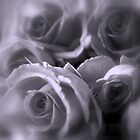 Roses in Soft Tones by Lozzar Flowers &amp; Art