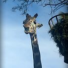 Giraffe by amyschuldies