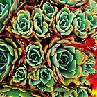 succulents by seagrass-cowes