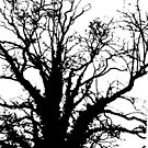 This Tree by Tamsin George