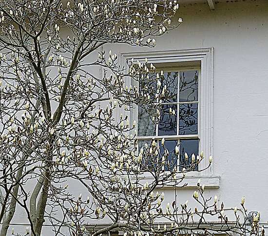 White Magnolia On White Walls by Fara
