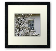 White Magnolia On White Walls Framed Print