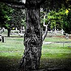 friend at the ross bay cemetery by maria miller