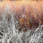 Willows by BrianAShaw