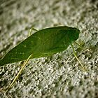 A Moving Leaf? by Raymond Doyle