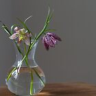 Snake's head fritillary by Justine Gordon