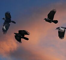 As The Crow Flies by byronbackyard