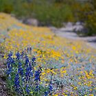 Desert Wildflowers by Cathy Jones