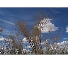 Brush and Sky Photographic Print