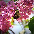 Busy Bee by pratt1ak