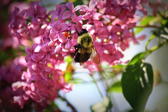 Busy Bee by pratt1ak