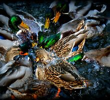 Diving Ducks by pratt1ak