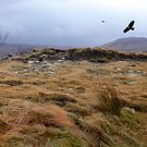 Eagles at Rannoch Moor, Scotland by Sally Green