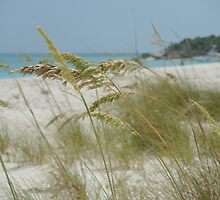 Turks and Caicos Sea Oats II by studio20seven