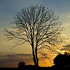 Tree at Sunset by Paul Collin