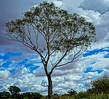 Loney Tree HDR by D-GaP