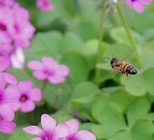 Bumble Bee In Flight by aprilann