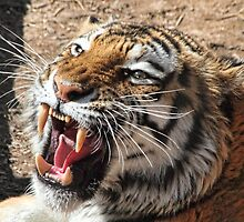 Roar Of The Tiger by Gene Praag