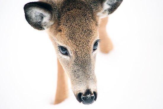 Doe A Deer by Karol Livote